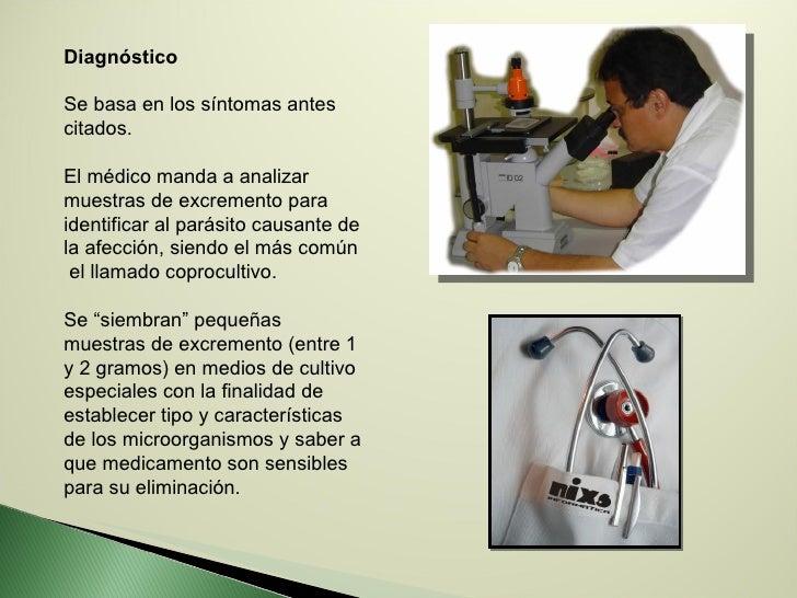 Diagnóstico Se basa en los síntomas antes citados.  El médico manda a analizar muestras de excremento para identificar al ...