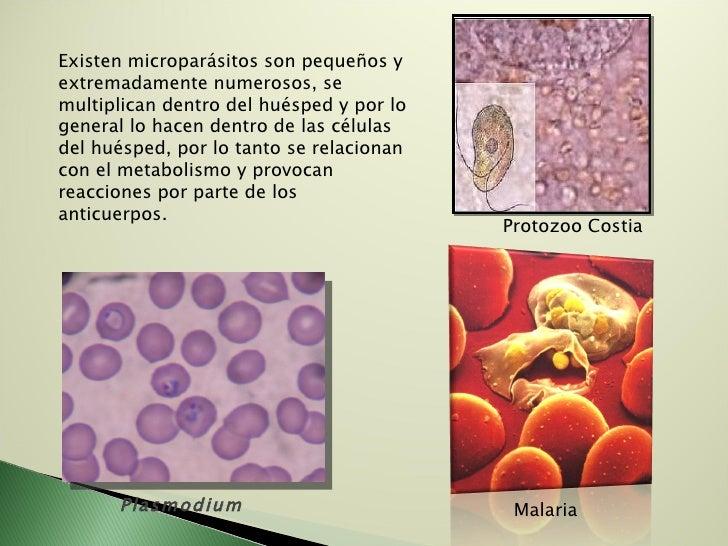 Existen microparásitos son pequeños y extremadamente numerosos, se multiplican dentro del huésped y por lo general lo hace...