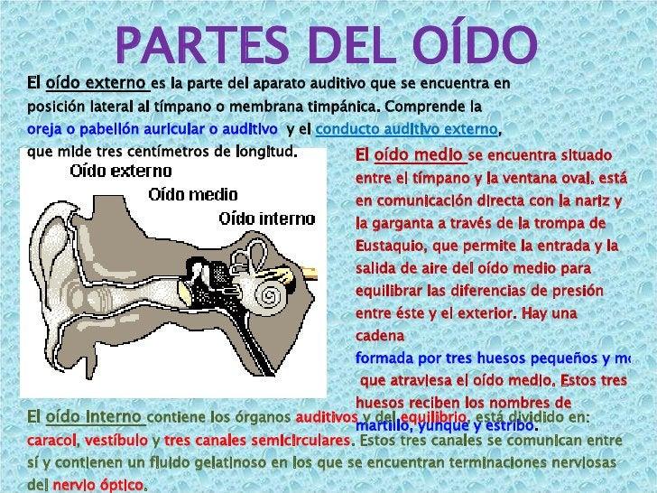 PARTES DEL OÍDO El  oído externo  es la parte del aparato auditivo que se encuentra en posición lateral al tímpano o membr...