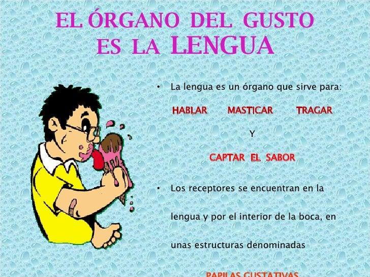 <ul><li>La lengua es un órgano que sirve para: </li></ul><ul><li>HABLAR  MASTICAR  TRAGAR </li></ul><ul><li>Y </li></ul><u...
