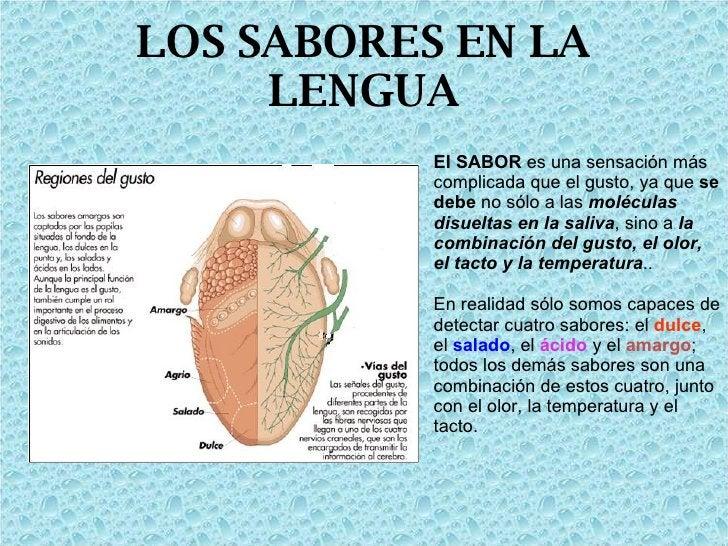 LOS SABORES EN LA LENGUA El SABOR  es una sensación más complicada que el gusto, ya que  se debe  no sólo a las  moléculas...