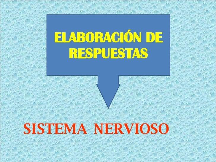 <ul><li>SISTEMA  NERVIOSO </li></ul>ELABORACIÓN DE RESPUESTAS