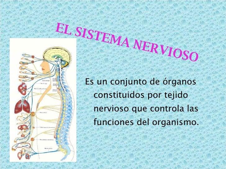 <ul><li>Es un conjunto de órganos constituidos por tejido nervioso que controla las funciones del organismo. </li></ul>EL ...