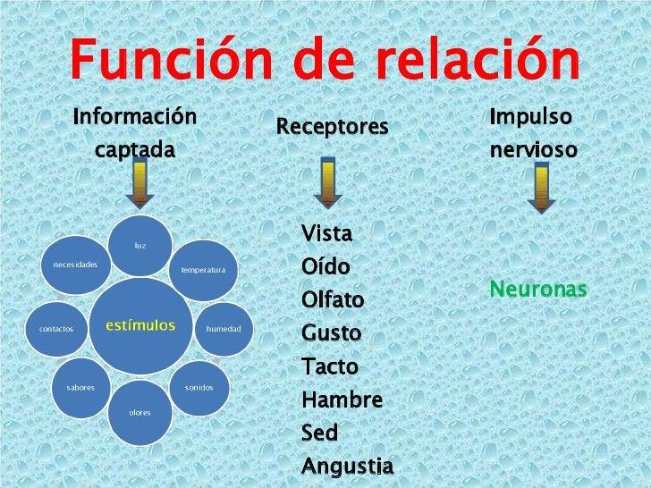 Función de relación Información captada Receptores Vista Oído Olfato Gusto Tacto Hambre Sed Angustia … Impulso nervioso Ne...