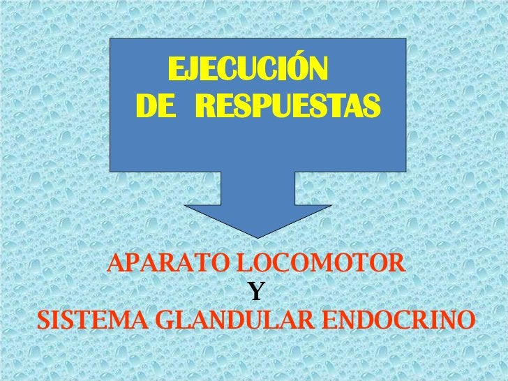 <ul><li>APARATO LOCOMOTOR </li></ul><ul><li>Y </li></ul><ul><li>SISTEMA GLANDULAR ENDOCRINO </li></ul>EJECUCIÓN  DE  RESPU...