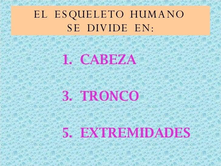 EL  ESQUELETO  HUMANO  SE  DIVIDE  EN: <ul><li>CABEZA </li></ul><ul><li>TRONCO </li></ul><ul><li>EXTREMIDADES </li></ul>