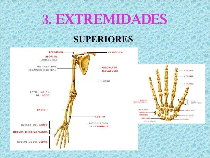 3.  EXTREMIDADES SUPERIORES