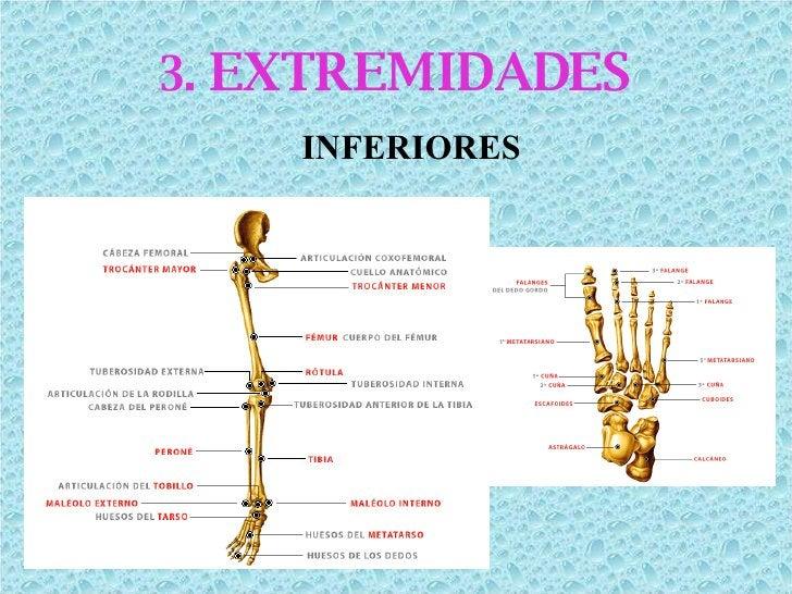 3.  EXTREMIDADES INFERIORES