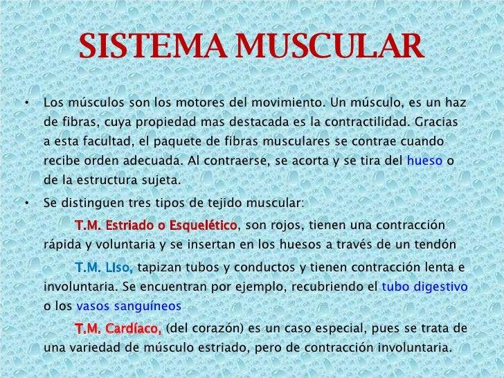 <ul><li>Los músculos son los motores del movimiento. Un músculo, es un haz de fibras, cuya propiedad mas destacada es la c...