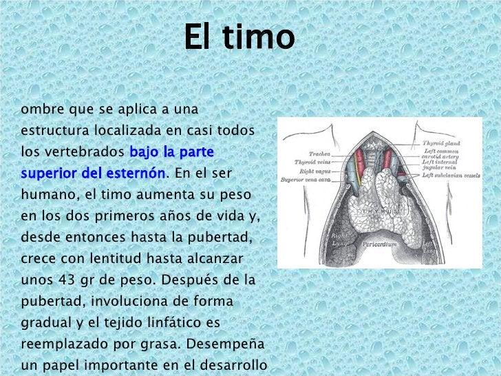 El timo  <ul><li>Nombre que se aplica a una estructura localizada en casi todos los vertebrados  bajo la parte superior de...