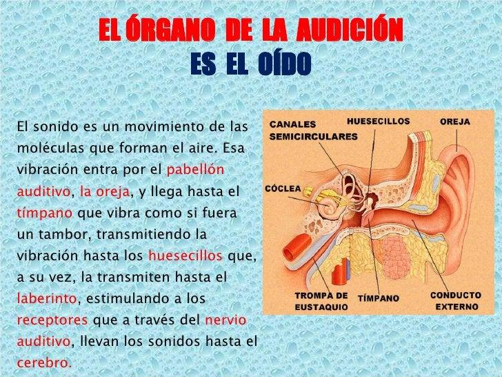EL ÓRGANO  DE  LA  AUDICIÓN ES  EL  OÍDO El sonido es un movimiento de las moléculas que forman el aire. Esa vibración ent...