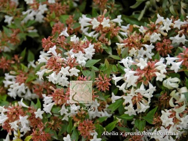 Galería imágenes Herba Nova