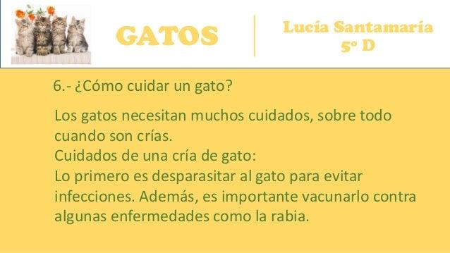 GATOS Lucía Santamaría 5º D 6.- ¿Cómo cuidar un gato? Los gatos necesitan muchos cuidados, sobre todo cuando son crías. Cu...