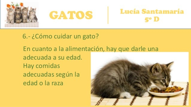 GATOS Lucía Santamaría 5º D 6.- ¿Cómo cuidar un gato? En cuanto a la alimentación, hay que darle una adecuada a su edad. H...