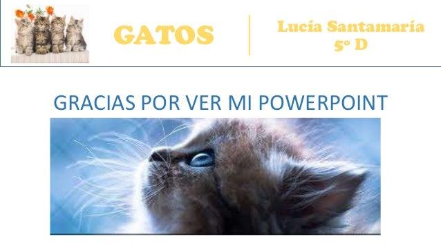 GATOS Lucía Santamaría 5º D GRACIAS POR VER MI POWERPOINT