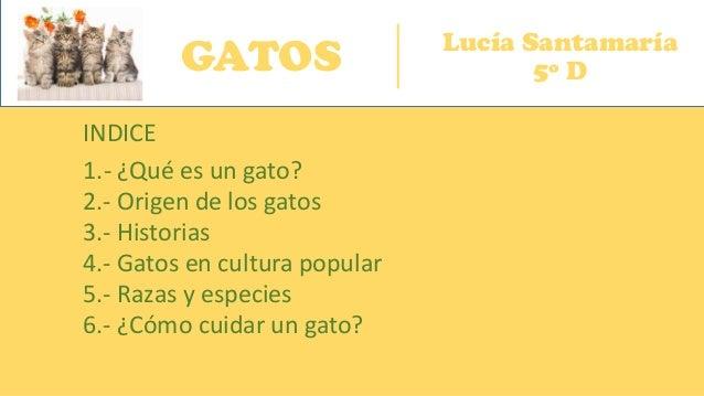 GATOS Lucía Santamaría 5º D INDICE 1.- ¿Qué es un gato? 2.- Origen de los gatos 4.- Gatos en cultura popular 3.- Historias...