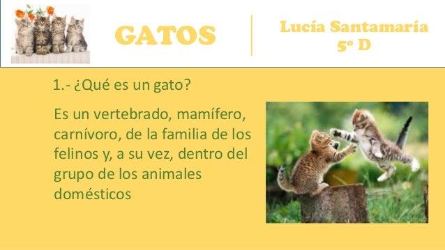 GATOS Lucía Santamaría 5º D 1.- ¿Qué es un gato? Es un vertebrado, mamífero, carnívoro, de la familia de los felinos y, a ...