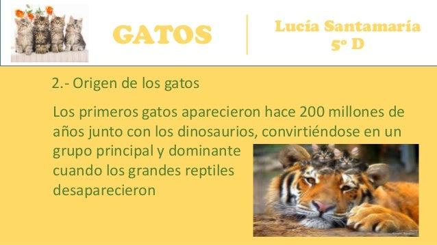GATOS Lucía Santamaría 5º D 2.- Origen de los gatos Los primeros gatos aparecieron hace 200 millones de años junto con los...