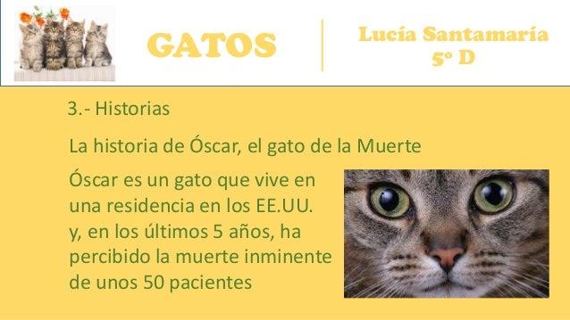 GATOS Lucía Santamaría 5º D 3.- Historias La historia de Óscar, el gato de la Muerte Óscar es un gato que vive en una resi...