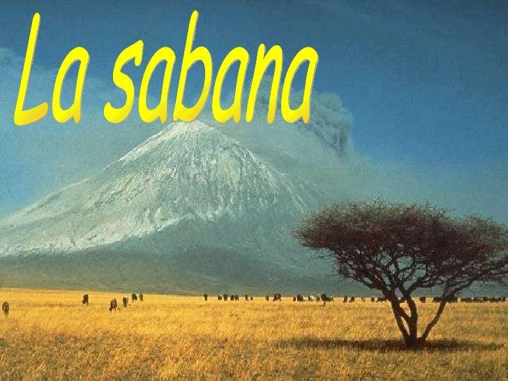 La sabana