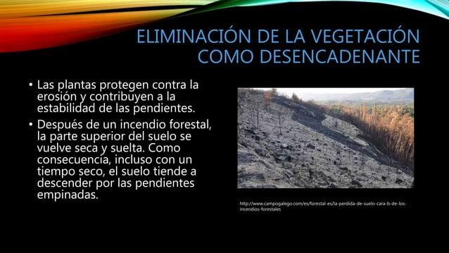 ELIMINACIÓN DE LA VEGETACIÓN COMO DESENCADENANTE • Las plantas protegen contra la erosión y contribuyen a la estabilidad d...