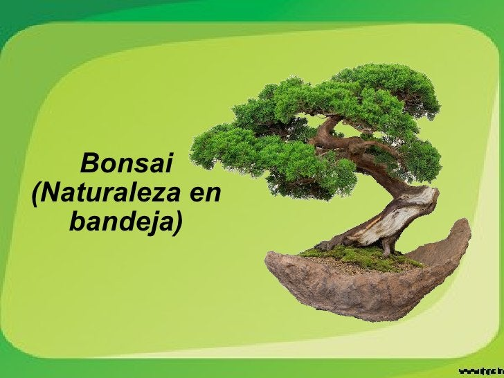 Bonsai (Naturaleza en bandeja)