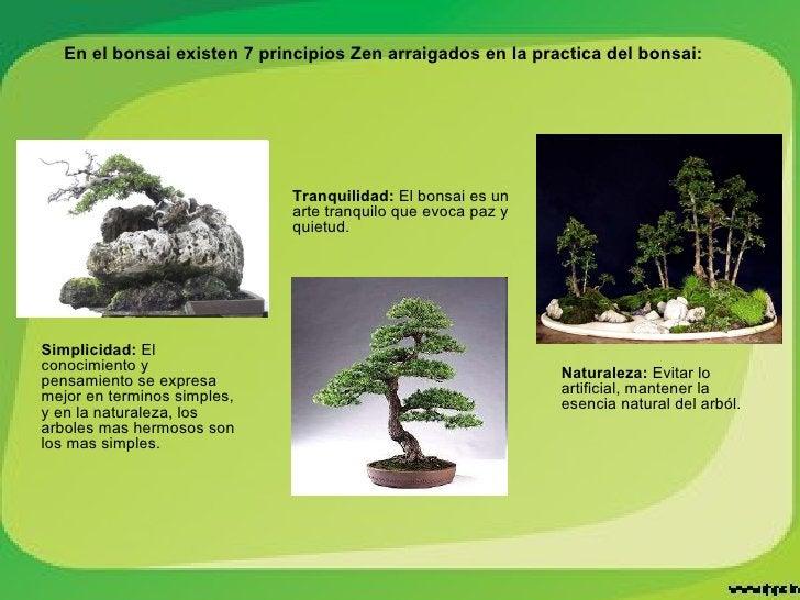 Simplicidad:  El conocimiento y pensamiento se expresa mejor en terminos simples, y en la naturaleza, los arboles mas herm...