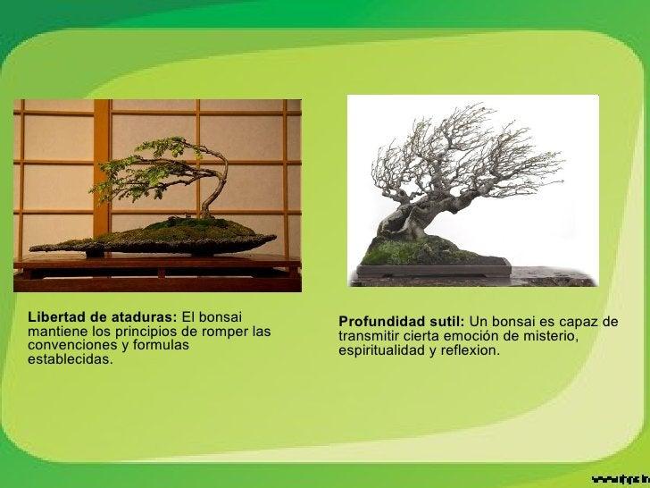 Libertad de ataduras:  El bonsai mantiene los principios de romper las convenciones y formulas establecidas. Profundidad s...