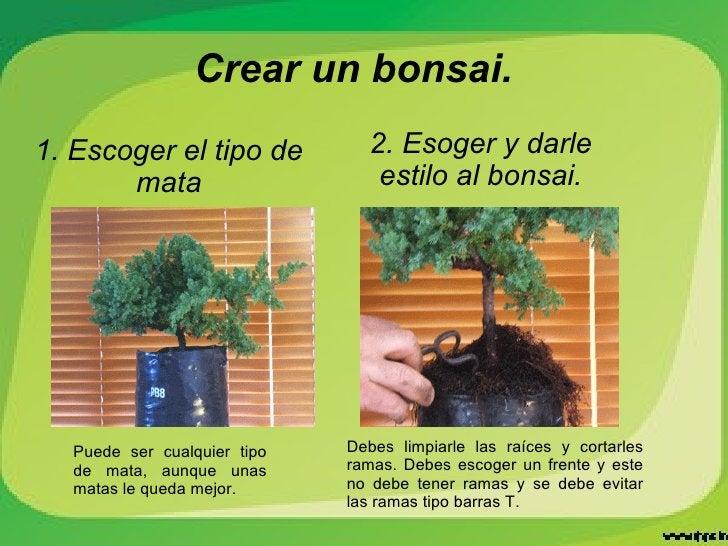 Crear un bonsai. 1. Escoger el tipo de mata Puede ser cualquier tipo de mata, aunque unas matas le queda mejor. Debes limp...