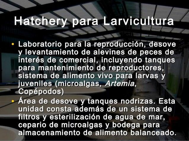 Maricultura de peces en el estado aragua venezuela for Tanques para cria de peces