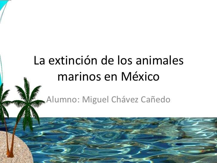 La extinción de los animales    marinos en México  Alumno: Miguel Chávez Cañedo