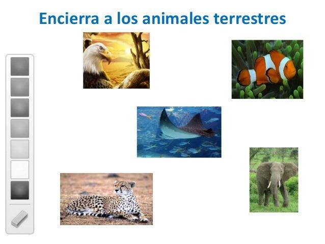 Encierra a los animales terrestres