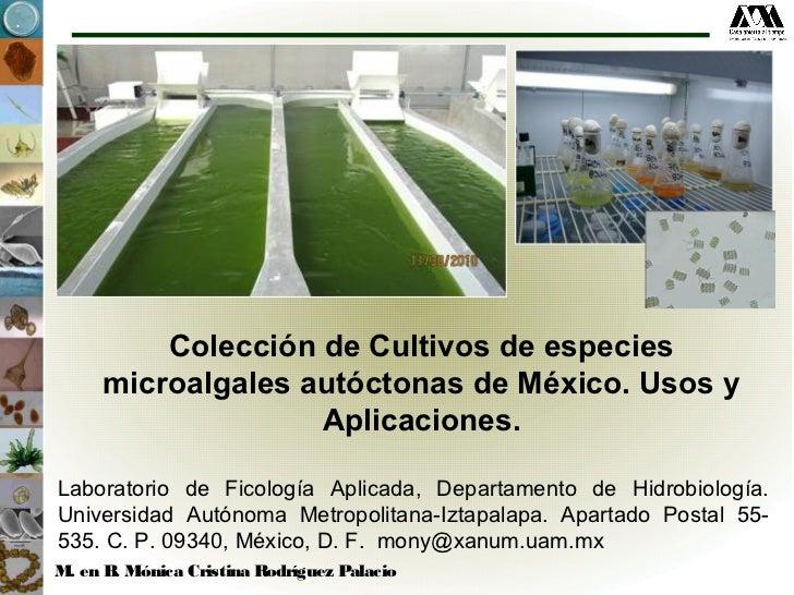 Colección de Cultivos de especies     microalgales autóctonas de México. Usos y                   Aplicaciones.Laboratorio...
