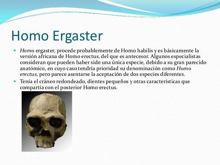 Homo Ergaster<br />Homo ergaster, procede probablemente de Homo habilis y es básicamente la versión africana de Homo erect...