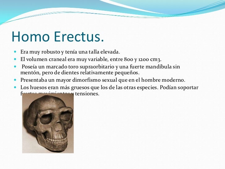 Homo Erectus.<br />Era muy robusto y tenía una talla elevada. <br />El volumen craneal era muy variable, entre 800 y 1200 ...