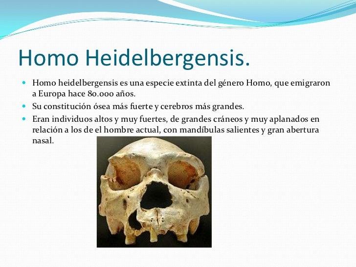 Homo Heidelbergensis.<br />Homo heidelbergensis es una especie extinta del género Homo, que emigraron a Europa hace 80.000...