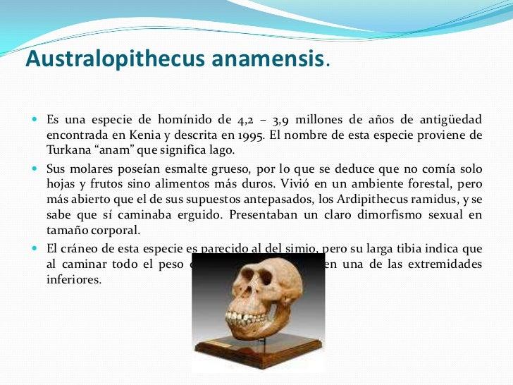Australopithecus anamensis.<br />Es una especie de homínido de 4,2 – 3,9 millones de años de antigüedad encontrada en Keni...