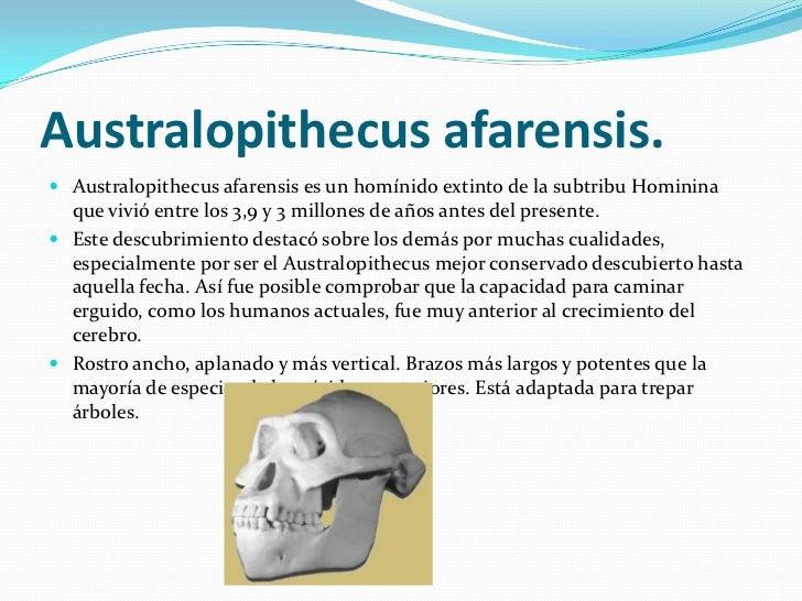 Australopithecus afarensis.<br />Australopithecus afarensis es un homínido extinto de la subtribu Hominina que vivió entre...