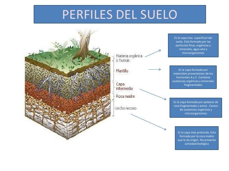 Presentaci n perfil del suelo cesar rodriguez for Como estan formados los suelos