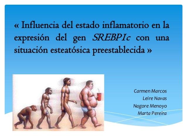 « Influencia del estado inflamatorio en laexpresión del gen SREBP1c con unasituación esteatósica preestablecida »Carmen Ma...