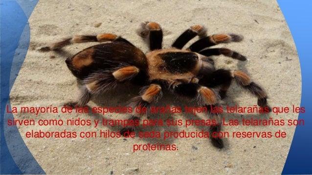 Cuando las tarantulas atacan