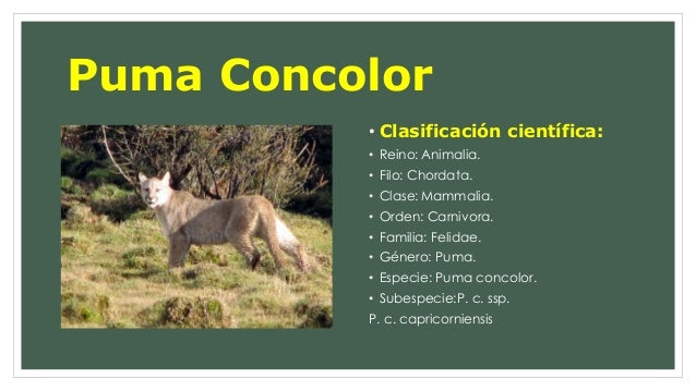 diagrama de espina dorsal presentaci  n puma concolor  presentaci  n puma concolor