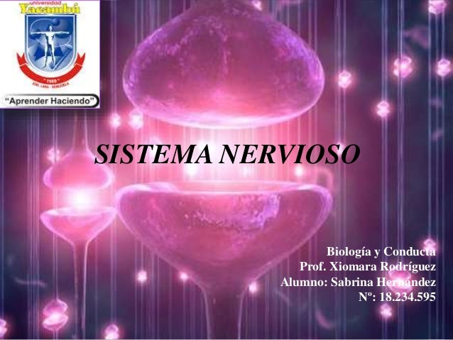 SISTEMA NERVIOSO Biología y Conducta Prof. Xiomara Rodríguez Alumno: Sabrina Hernández Nº: 18.234.595