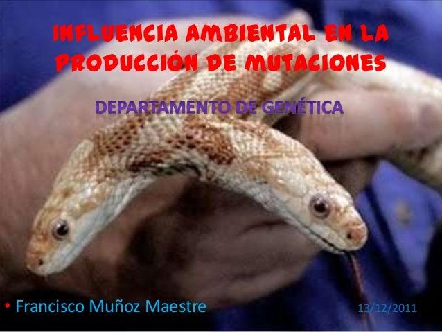 Influencia ambiental en la producción de mutaciones • Francisco Muñoz Maestre 13/12/2011