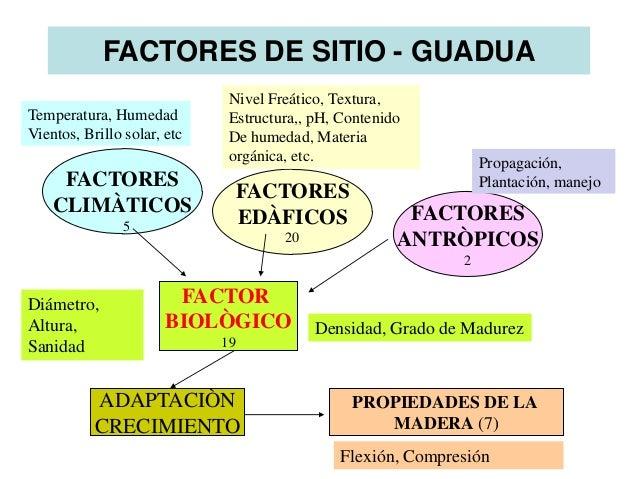 La silvicutura de la guadua en pa ses latinoamericanos for Factores para seleccionar el terreno para el vivero