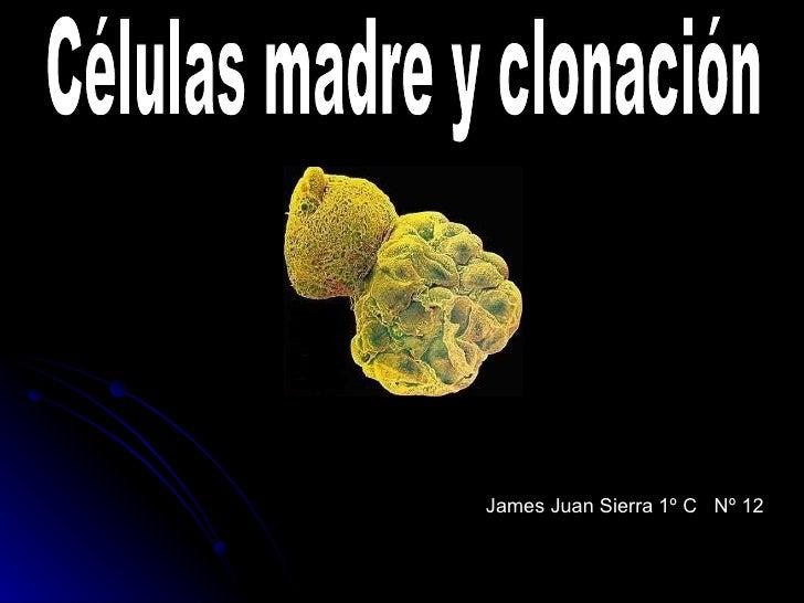James Juan Sierra 1º C  Nº 12 Células madre y clonación