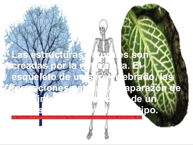 Las estructuras naturales soncreadas por la naturaleza. Elesqueleto de un ser vertebrado, lasformaciones pétreas,el capara...