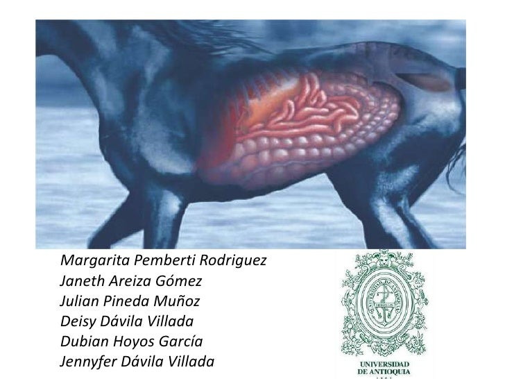 Margarita Pemberti Rodriguez<br />JanethAreiza Gómez<br />Julian Pineda Muñoz<br />Deisy Dávila Villada<br />Dubian Hoyos ...