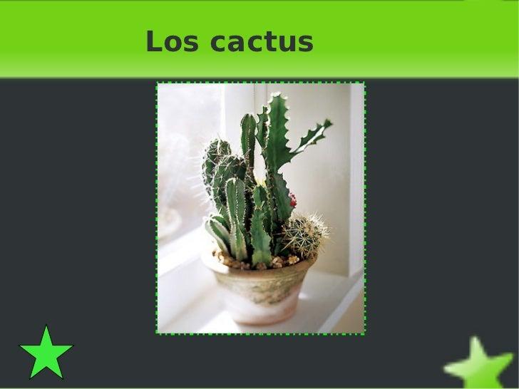 Presentaci n sobre cactus for Informacion sobre el cactus