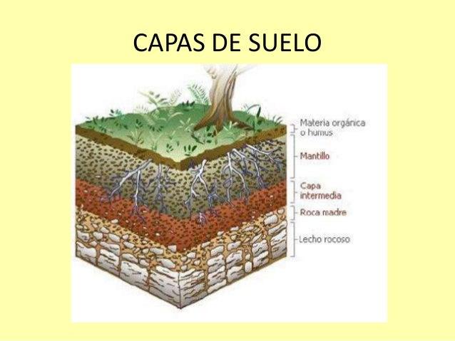Introducci n al an lisis de suelos for El suelo y sus capas